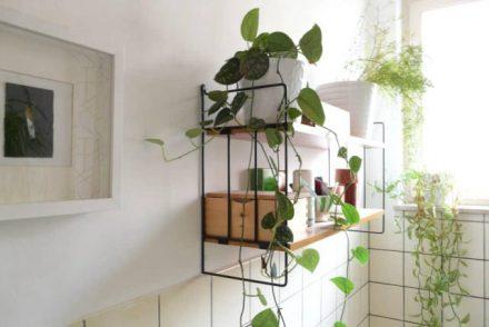 Khử mùi nhà vệ sinh bằng cách trồng cây xanh